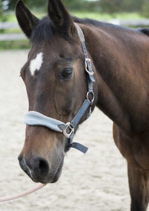Pony Sculpie