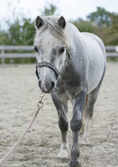 Pony Charley