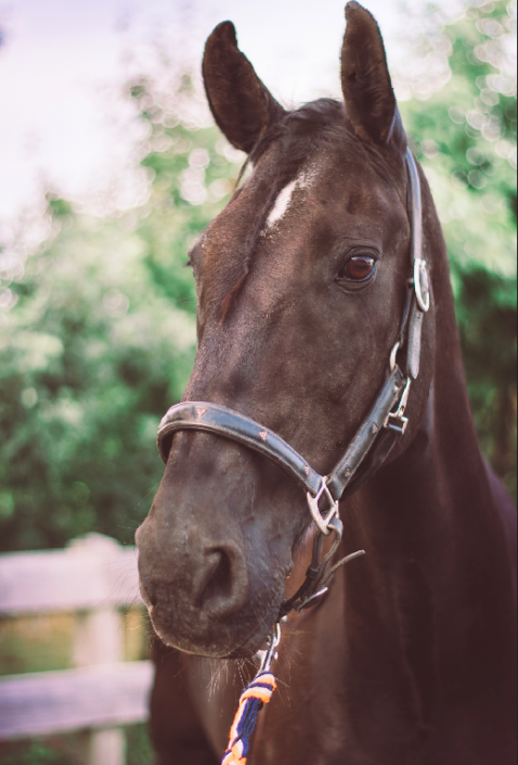 Paard Jelle